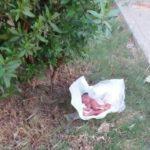 دستگیری دو متهم به خرید و فروش نوزاد در جاجرم