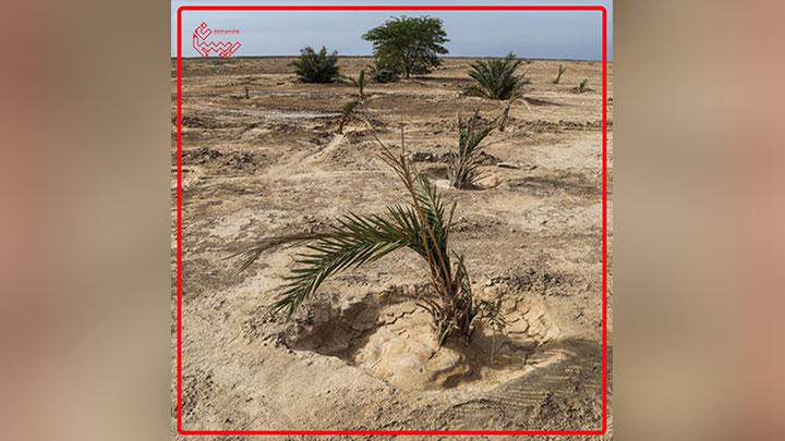 فانتزی حمایت از محیط زیست در بیابان برهوت